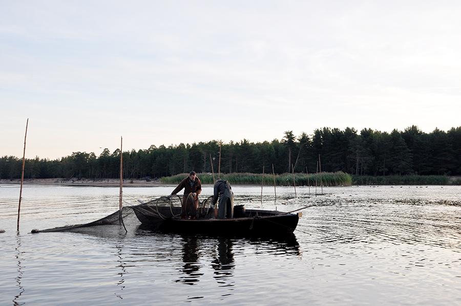 Zveja Gaujā